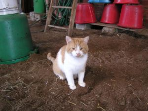 George barn cat