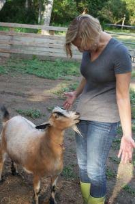 Humphrey the goat