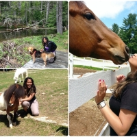 Kissing Horses and Hiking Mountains with My Dog in New Hampshire