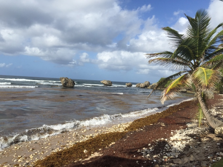 Bathsheba coast
