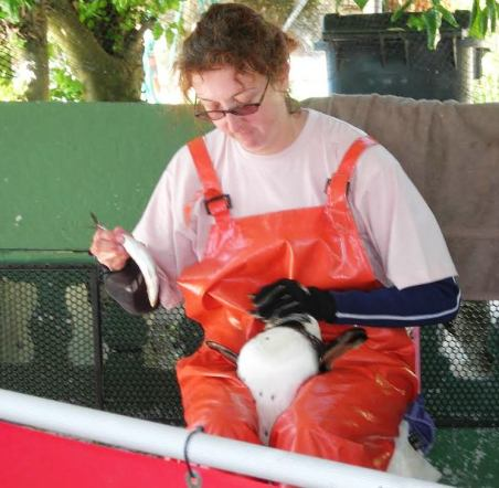 Stanfield feeding rescued penguin