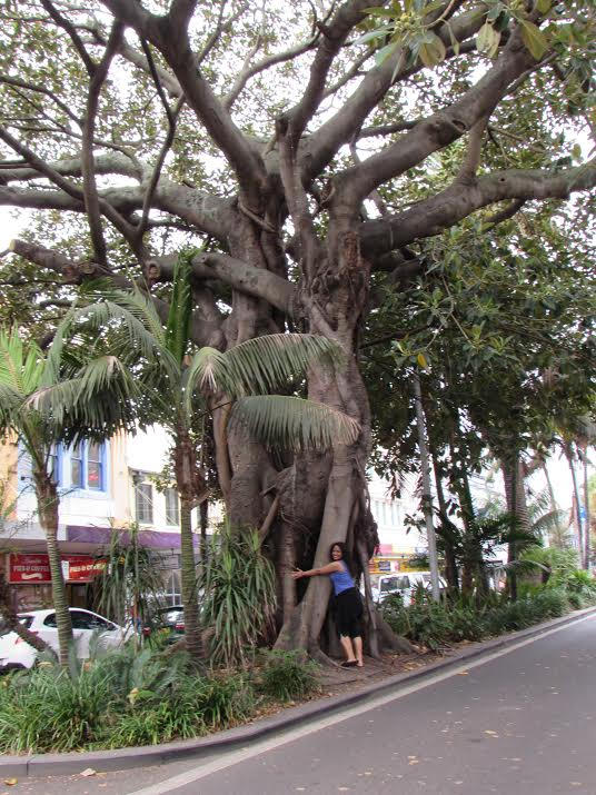 Treehugging in Manly
