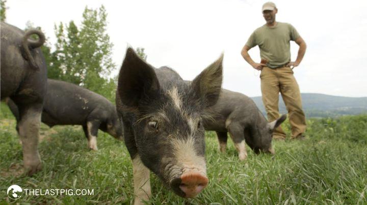 The Last Pig2