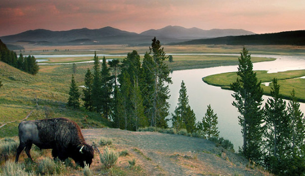 Bison-YS-River-Sunset_Dollar_680-612x353