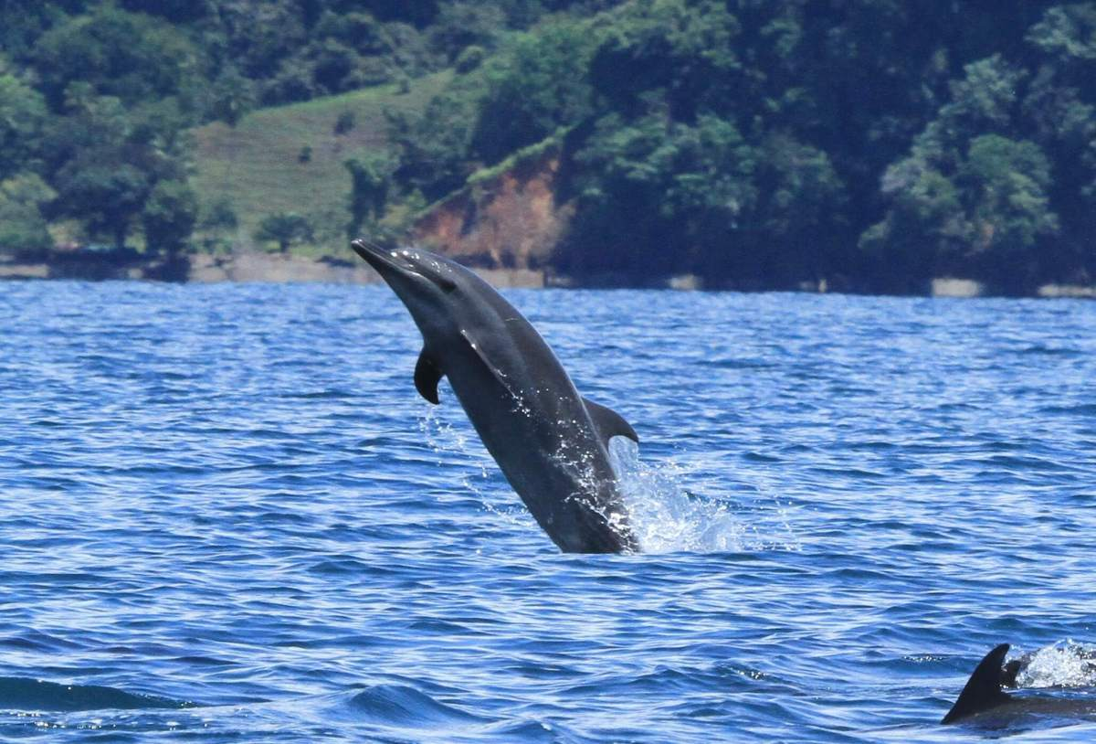Protecting Whales & Dolphins in Golfo Dulce, Costa Rica (Green Global Travel)