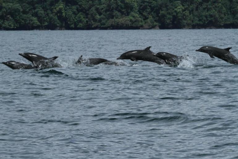 dolphin-pod-1-1024x683