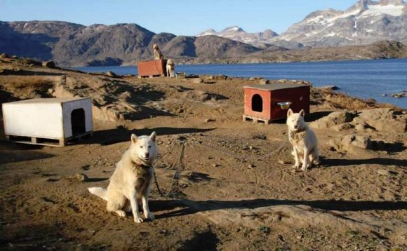 Climate Change Doesn't Just Affect Humans – It's Affecting These Dogs, As Well (BarkPost)